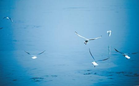 Image de fond de belles mouettes de mer volant Banque d'images - 75151677