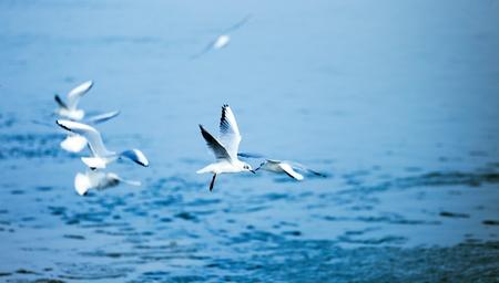 Image de fond de belles mouettes de mer volant Banque d'images - 75192654