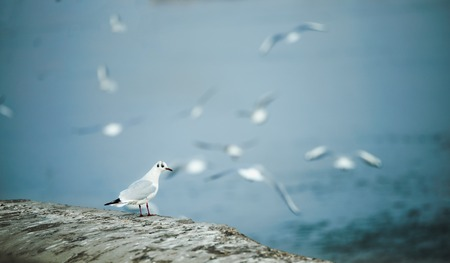 Background image of beautiful sea gulls flying