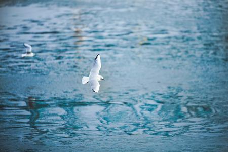 Image de fond de belles mouettes de mer volant Banque d'images - 75192698