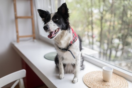 Happy dog waiting for owner on window ledge
