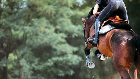 Picture of horse jumping while carrying jockey