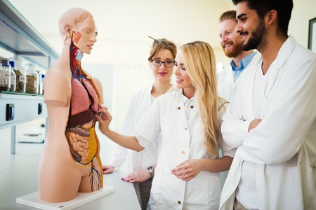 Students of medicine examining anatomical model in classroom Reklamní fotografie