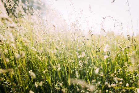 Portrait of beautiful green wild meadow on sunlight
