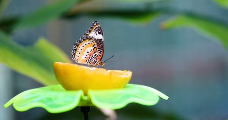 レモン君のカラフルな蝶の写真 写真素材