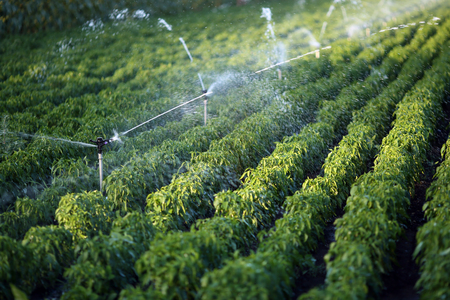 Irrigation system in function watering agriculutural plants Stok Fotoğraf