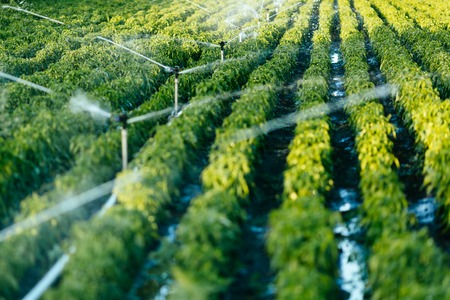 Irrigation system in function watering agriculutural plants Stockfoto
