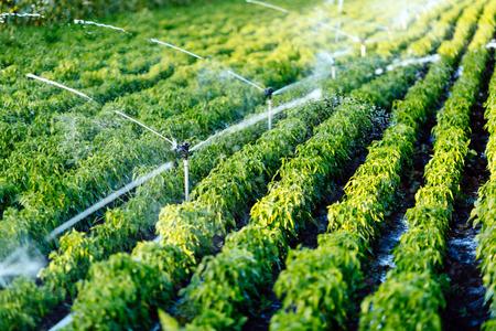農学の植物に水をまく関数で灌漑システム