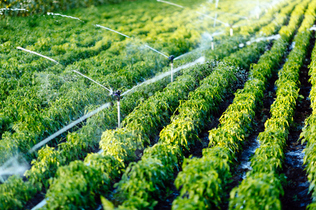 Irrigation system in function watering agriculutural plants Archivio Fotografico