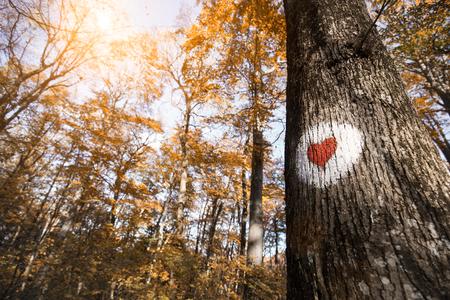Beeld van rood hart dat op boom wordt geschilderd Stockfoto