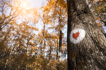 Picture of red heart painted on tree