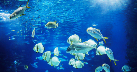 Picture of group of fish swimming underwater
