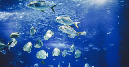 Beeld van groep vissen onderwater zwemmen