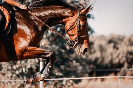 障害物の上に乗って馬のジャンプの写真