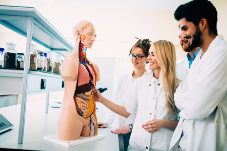 Students of medicine examining anatomical model in classroom Imagens