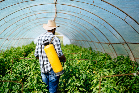 Young farmer protecting his plants spraying with chemicals Stock Photo