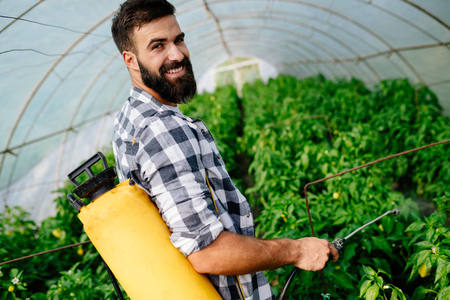Young worker spraying pesticides on fruit plantation Stock Photo