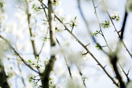 Blossoming beautiful trees