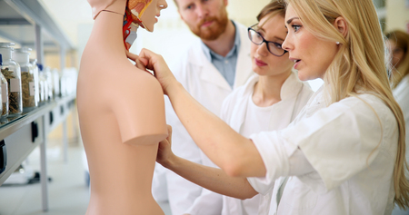 Students of medicine examining anatomical model in classroom 스톡 콘텐츠