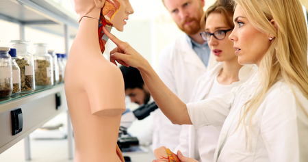 Student of medicine examining anatomical model in lab