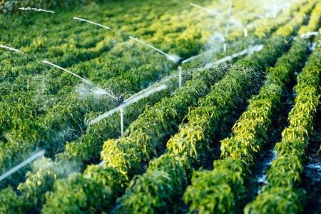機能性水やりの灌漑システム 写真素材