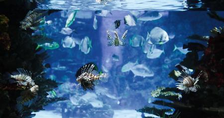 수 중 수영하는 물고기의 그룹의 그림 스톡 콘텐츠