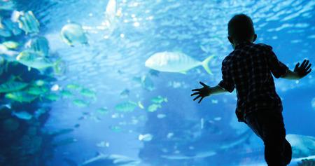 サンゴと熱帯魚と素晴らしい水中世界。 写真素材