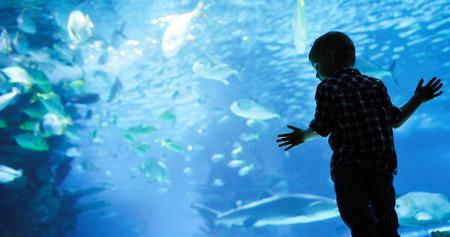 Prachtige onderwaterwereld met koralen en tropische vissen.