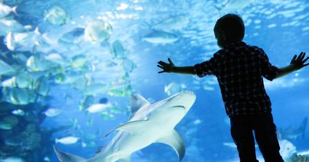 해양 수족관에서 수영하는 물고기를보고있는 아이