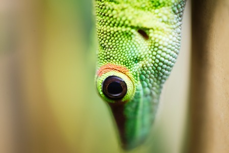 Close up of beautiful green lizard eye Фото со стока