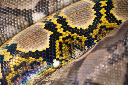 Yellow, brown, and black snake beautiful texture