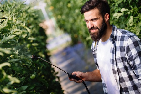 Young farmer protecting his plants with chemicals Stock Photo