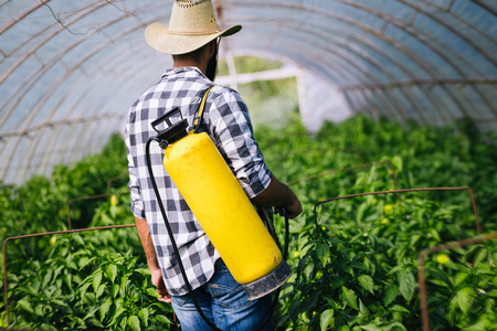 Young farmer protecting his plants with chemicals 写真素材