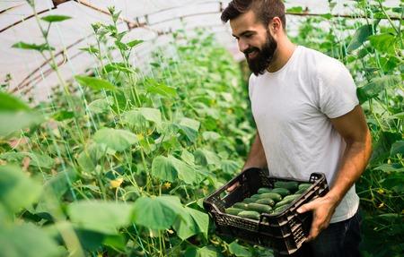 Man working in a greenhouse. Standard-Bild