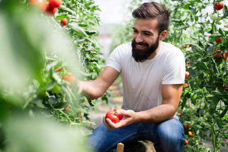 Friendly farmer at work in greenhouse Stockfoto