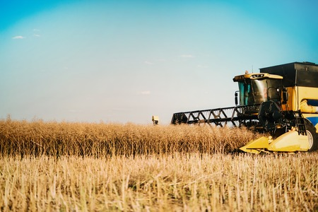 Picture of combine harvester machine harvesting crops