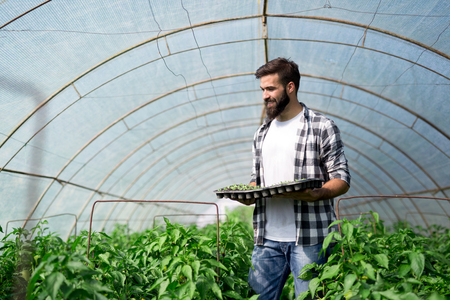 Young worker planting a tomatoes seedling in a greenhouse Stock Photo - 106783524
