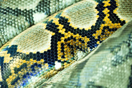 Yellow, brown, and black snake texture Stock Photo