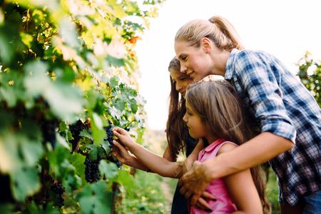 Happy wine grower family walking in vineyard