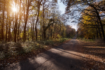 Picture of road leading through forest at sunlight