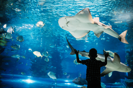 Serious boy looking in aquarium with tropical fish Stock Photo