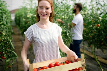 Woman working in a tomato greenhouse.