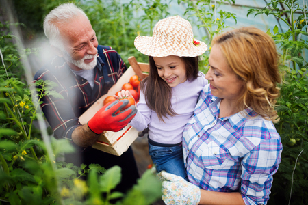 Grandfather growing organic vegetables with grandchildren and family at farm Stockfoto