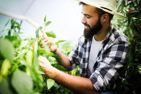 Attractive happy male farmer working in greenhouse Standard-Bild - 122811508