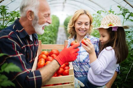 Grandfather growing organic vegetables with grandchildren and family at farm Banco de Imagens