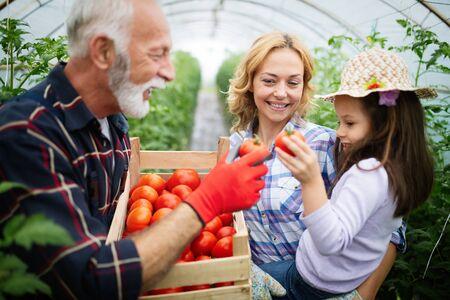 Opa kweekt biologische groenten met kleinkinderen en familie op de boerderij Stockfoto