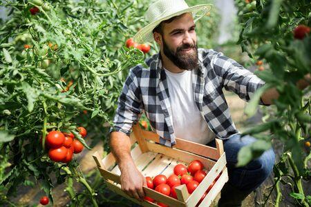 Agradable agricultor trabajando en invernadero Foto de archivo