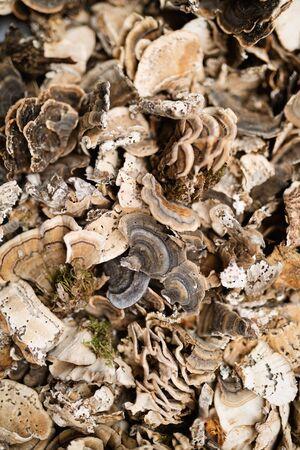 Freshly harvested healthy mushrooms background. Edible mushrooms