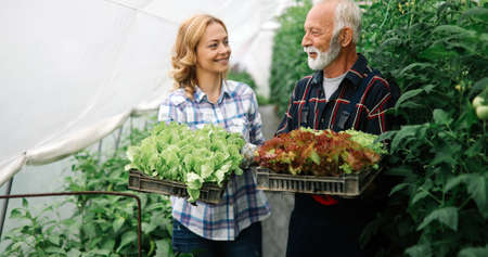 Family growing organic vegetables and healthy food at farm, greenhouse
