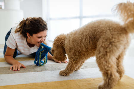 Beautiful young woman playing with a nice cute dog at home 版權商用圖片